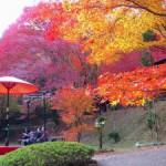 京都・神護寺