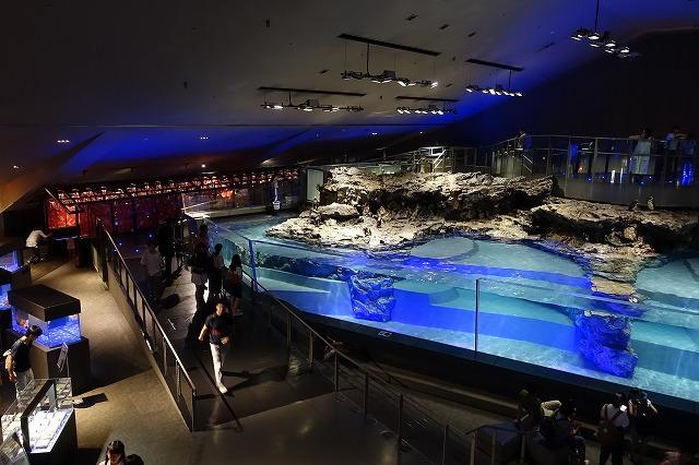 すみだ水族館ペンギン水槽