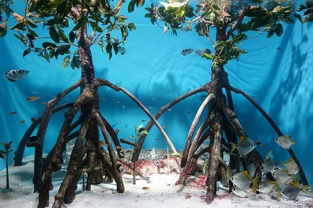 サンシャイン水族館マングローブ