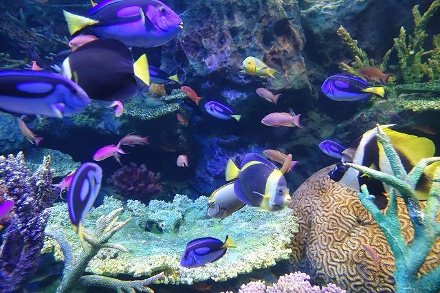 サンシャイン水族館南洋
