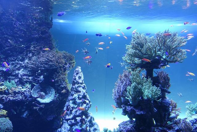 サンシャイン水族館珊瑚礁