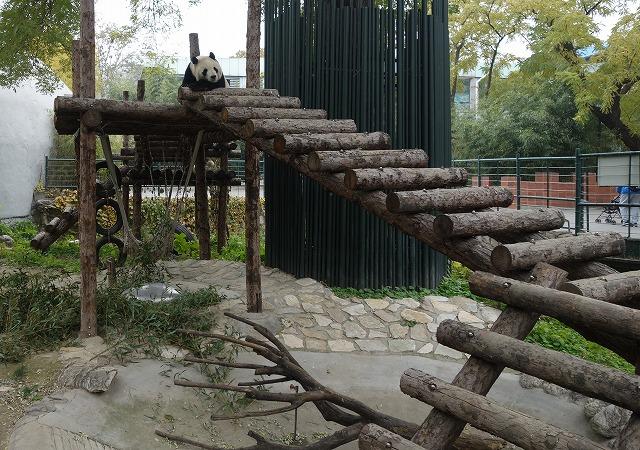 北京動物園パンダ
