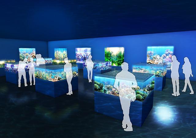 DMMかりゆし水族館イメージ