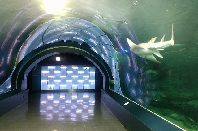 アクアパーク品川海中トンネル