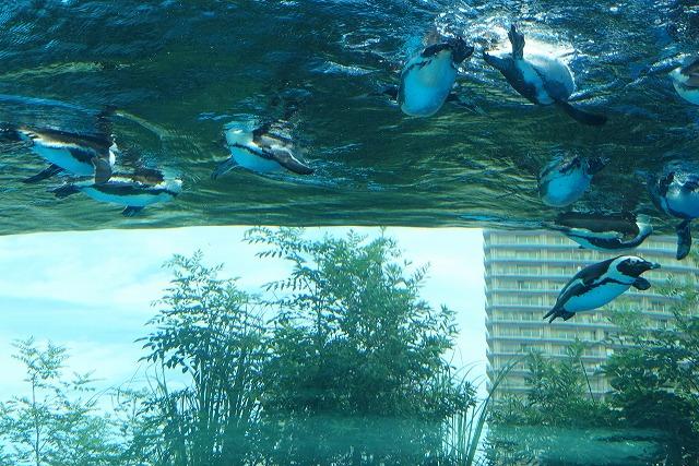 サンシャイン水族館天空のペンギン