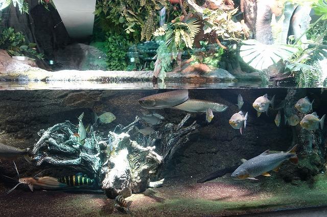 サンシャイン水族館アマゾン河