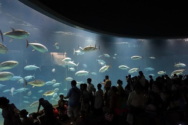 葛西臨海水族園マグロ大水槽