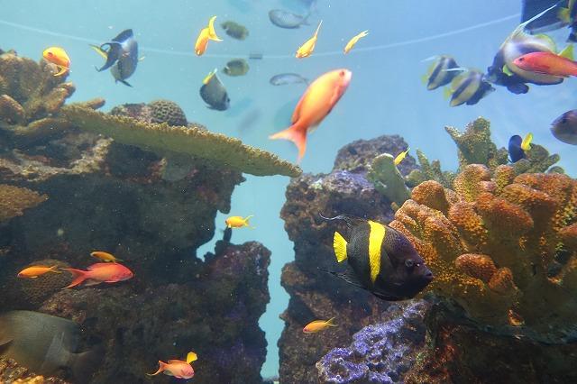 葛西臨海水族園世界の海