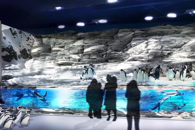 DMM水族館ペンギン