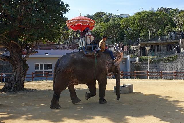 沖縄こどもの国ゾウ