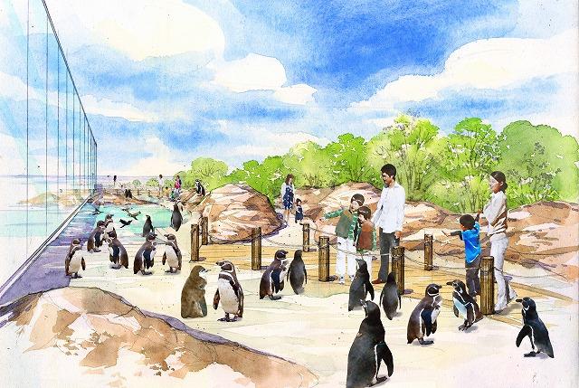 うみがたりマゼランペンギン